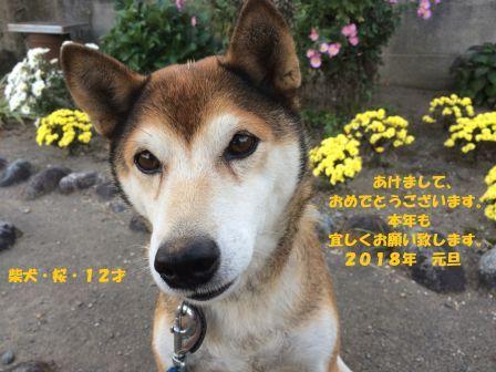 年賀状3 - コピー.jpg